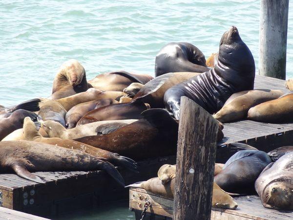 San Francisco, Fisherman Wharf Pier 39