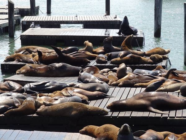 San rancisco, Fisherman Wharf Pier 39